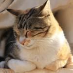 Un script en 2 étapes pour surmonter la paralysie du sommeil avec l'autohypnose